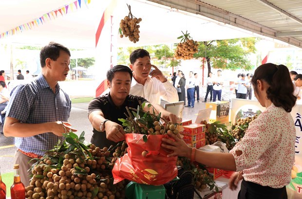 E-commerce expected to help Hung Yen longan reach out to foreign markets hinh anh 1