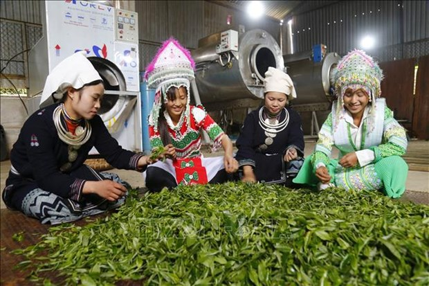 Remarkable progress seen in farming in ethnic minority-inhabited, remote areas hinh anh 1
