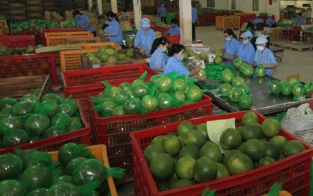 Ben Tre tourism sees fruits of its labour hinh anh 1