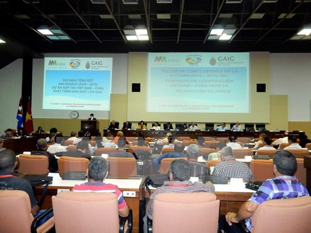 Encouraging outcomes of Vietnam-Cuba rice production project hinh anh 1