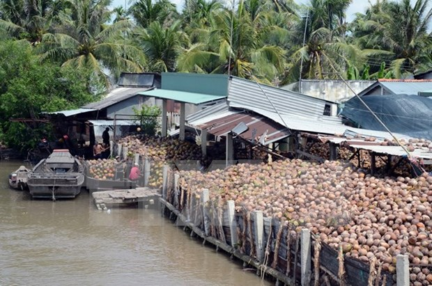 Coconut products account for 30 percent of Ben Tre's exports hinh anh 1