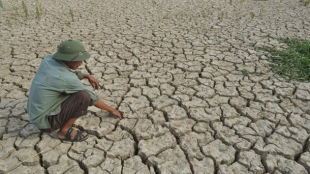 Over 150 billion VND needed to prevent drought in Hau Giang hinh anh 1