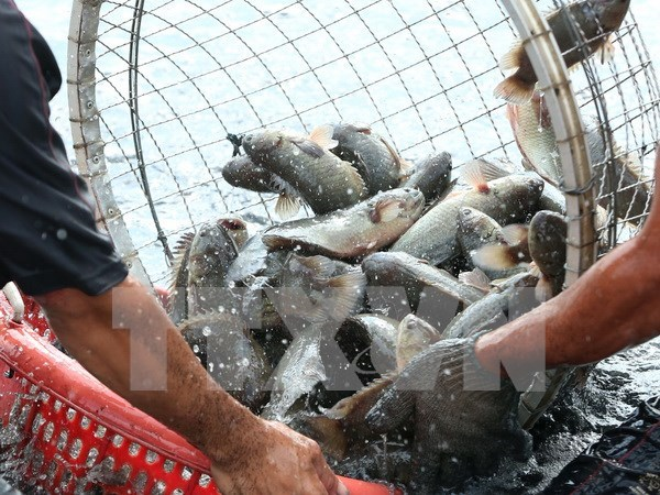 Vietnam joins FAO-funded project on sustainable aquaculture growth hinh anh 1