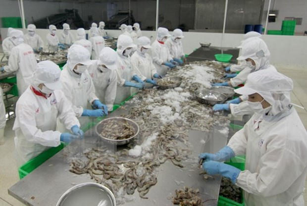 VASEP: Shrimp export to earn 3.3 billion USD in 2016 hinh anh 1