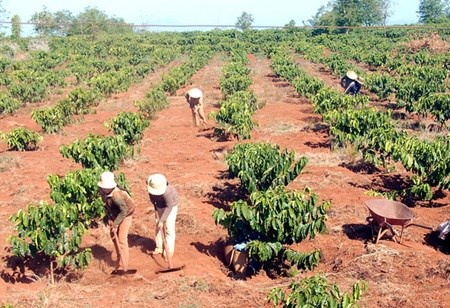 Central Highlands needs more irrigation facilities for coffee farming hinh anh 1