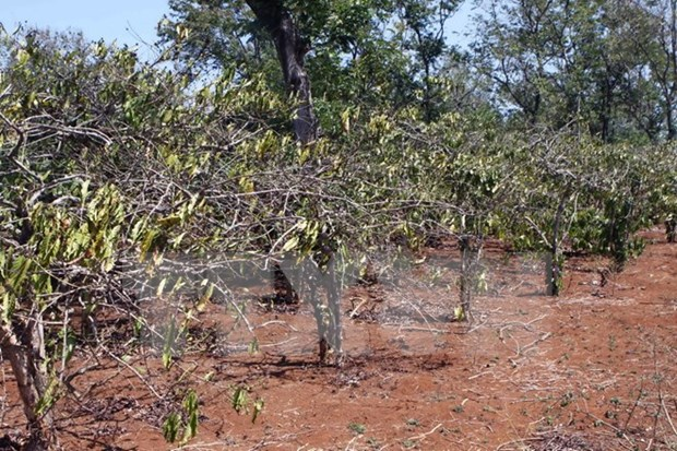 Dak Lak workshop focuses drought-prevention measures hinh anh 1
