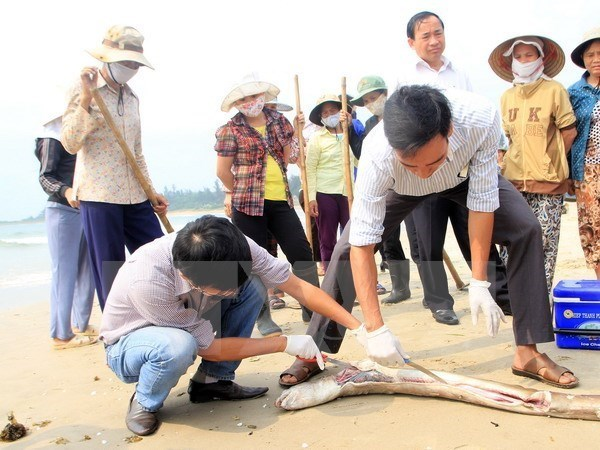 Quang Binh aids farmers over fish deaths hinh anh 1