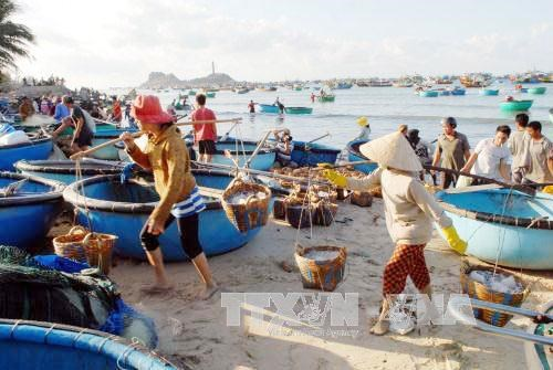Thua Thien-Hue: near-shore seawater safe for humans hinh anh 1