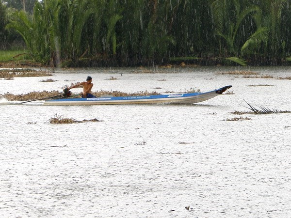 Early summer rain alleviates saltwater in Hau Giang hinh anh 1