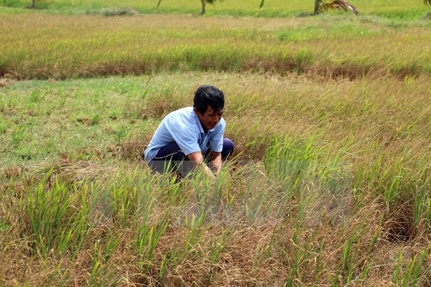 Tien Giang implements project fighting drought, saline intrusion hinh anh 1