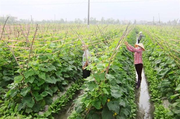 Organic produce becoming popular, lucrative hinh anh 1