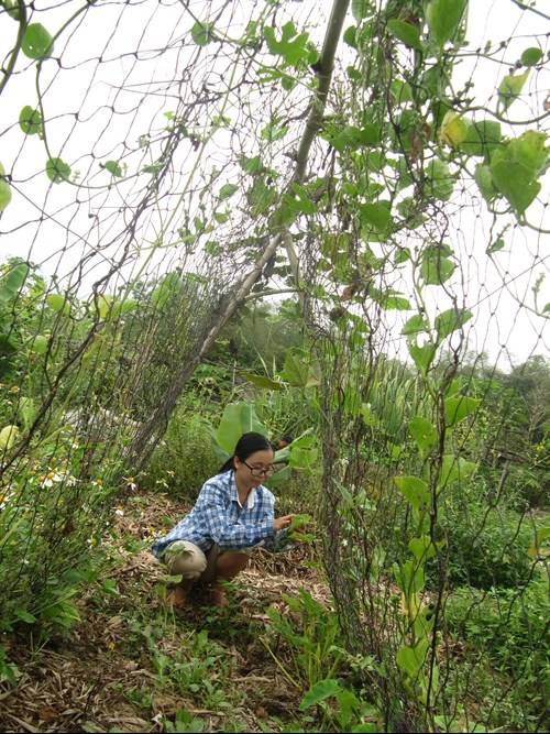 Organic farming needs support policy to grow hinh anh 1