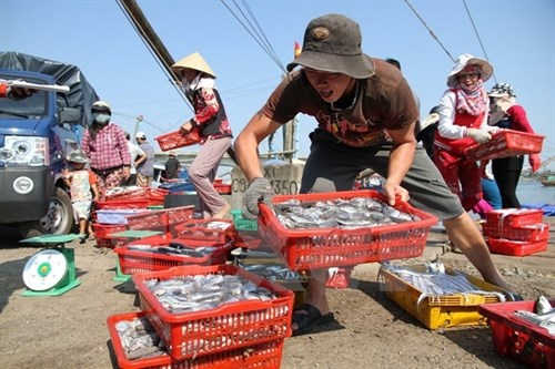 Tests show seafood samples from central provinces safe hinh anh 1
