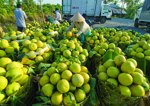 Less Mekong Delta fruit, higher prices hinh anh 1