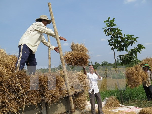 Korean NGO helps Cao Bang farmers improve income hinh anh 1