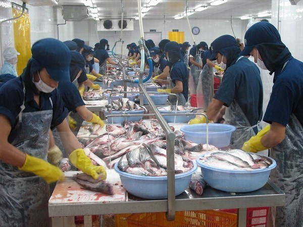 Export seafood quality not affected by mass fish deaths: VASEP hinh anh 1