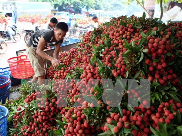 Workshop boosts fresh lychee exports via Lang Son border gates hinh anh 1