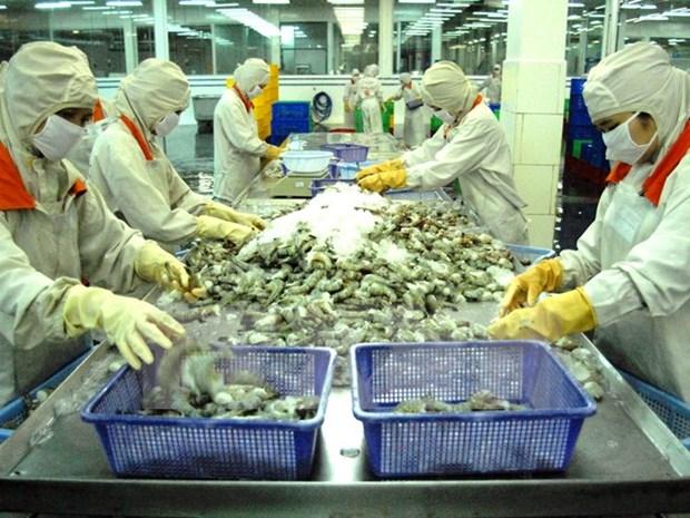 Ca Mau faces shrimp scarcity for export due to drought hinh anh 1