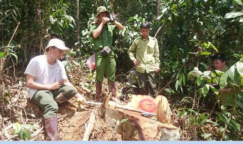 Lam Dong: Large-scale deforestation to face prosecution hinh anh 1