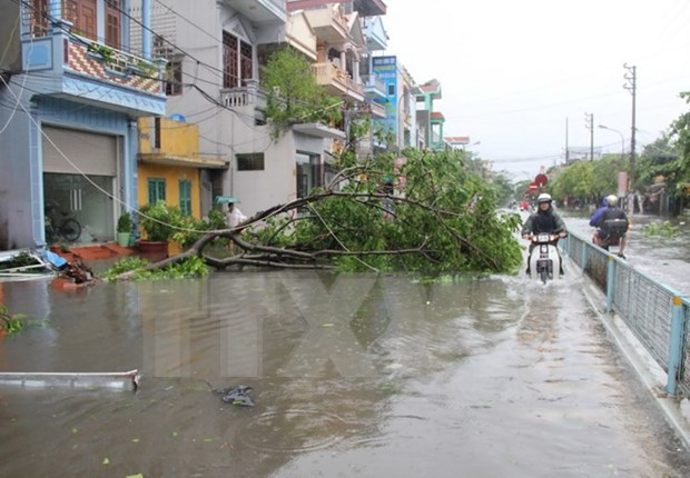 Storm Mirinae takes heavy toll on northern Vietnam hinh anh 1