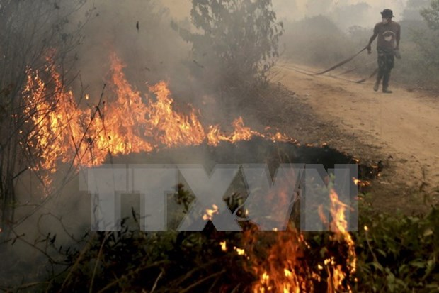 Indonesia pledges to tackle haze hinh anh 1