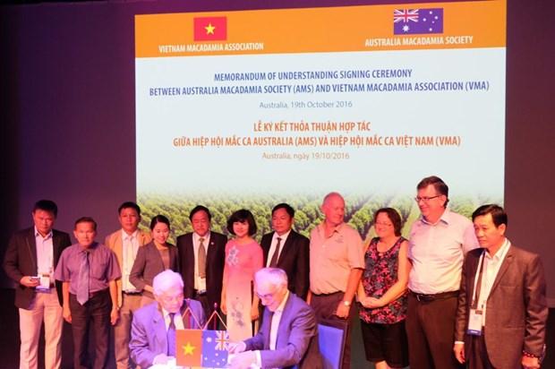 Vietnamese, Australian macadamia associations shake hands hinh anh 1