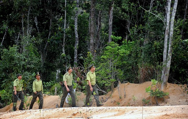 Tuyen Quang aims for more certified forest areas hinh anh 1