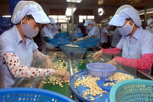 Cashew exports likely to reach 2.7 billion USD hinh anh 1