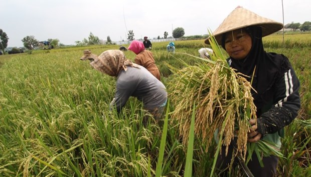 Indonesia: Stable food prices reduce poverty rate hinh anh 1