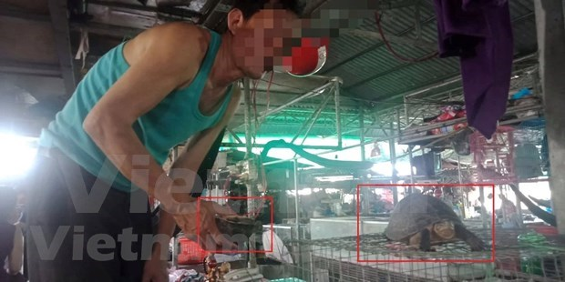 Strict punishments needed to stop wildlife trade hinh anh 3