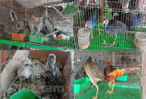 Strict punishments needed to stop wildlife trade hinh anh 1