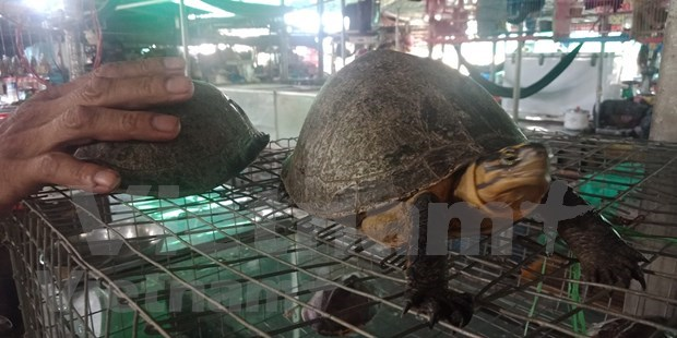 Caged life kills species in Vietnam's Red Data Book hinh anh 2
