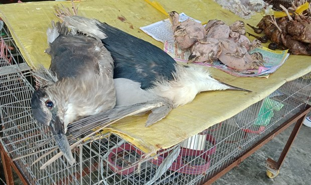 Caged life kills species in Vietnam's Red Data Book hinh anh 4