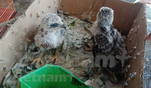 Strict punishments needed to stop wildlife trade hinh anh 2