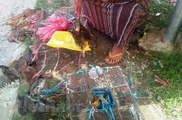 Efforts needed to remove wildlife black markets hinh anh 2