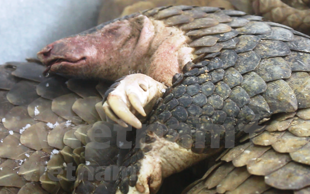 Efforts needed to remove wildlife black markets hinh anh 1