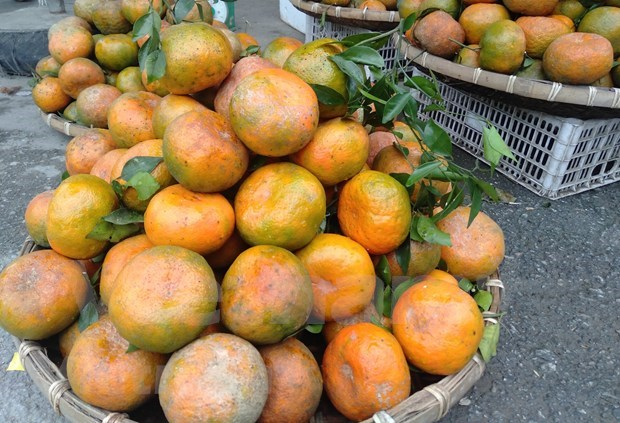 """""""Bu"""" orange a key agricultural product of Huong Son hinh anh 2"""
