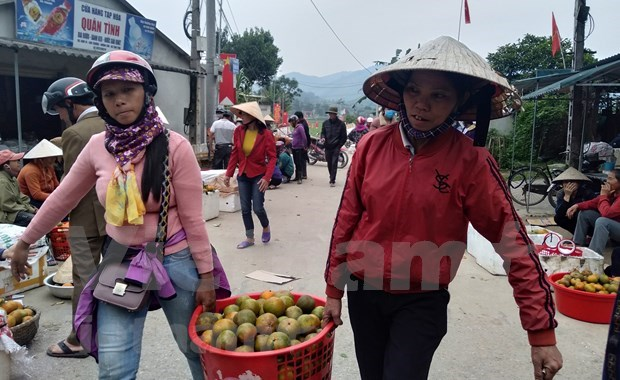 """""""Bu"""" orange a key agricultural product of Huong Son hinh anh 3"""