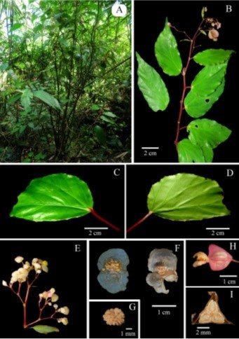 New plant and insect species found in Vietnam hinh anh 2