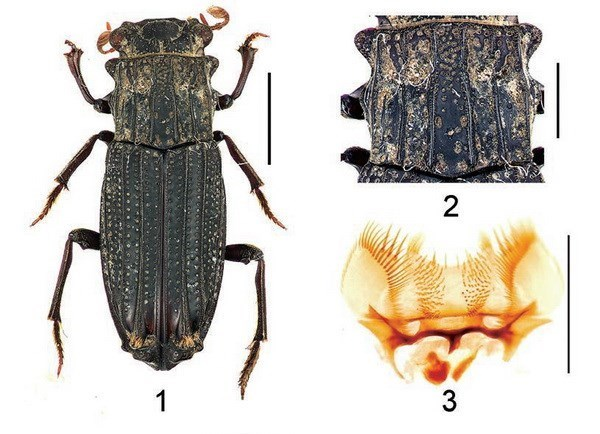 New plant and insect species found in Vietnam hinh anh 4