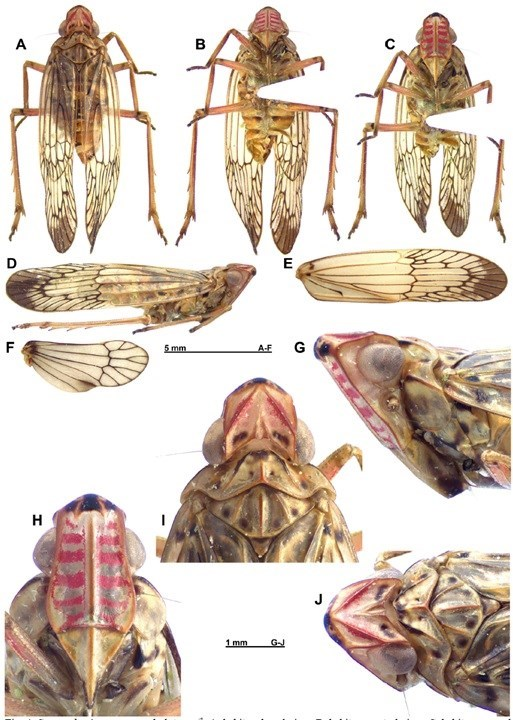 New plant and insect species found in Vietnam hinh anh 6