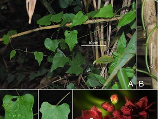 New plant and insect species found in Vietnam hinh anh 1