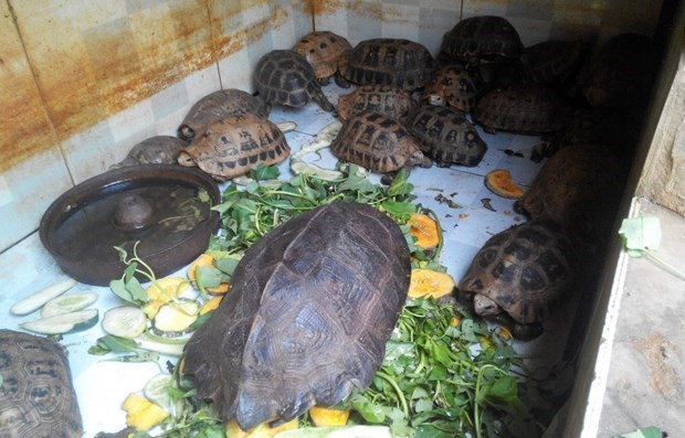 Drastic actions for combating illegal wildlife trading recommended hinh anh 1