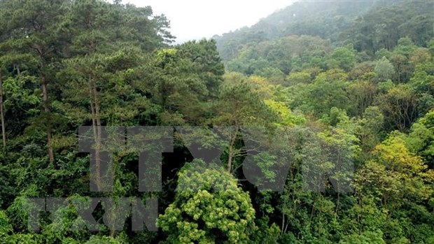 Vinh Phuc works to increase forest growing area hinh anh 1