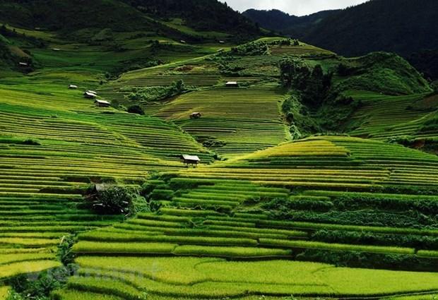Mu Cang Chai - stunning beauty in northwestern region hinh anh 3