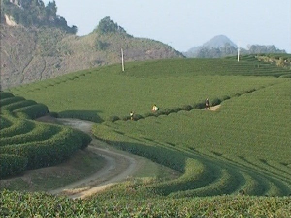 Moc Chau plateau: an attractive choice for holidaymakers hinh anh 2