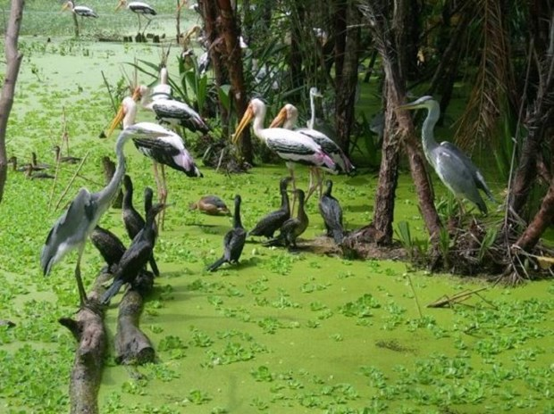 Ecotourism a means to sustain Ca Mau's bird parks hinh anh 2