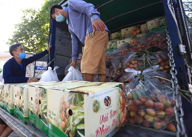 Measures sought to boost lychee sales in domestic, foreign markets hinh anh 1