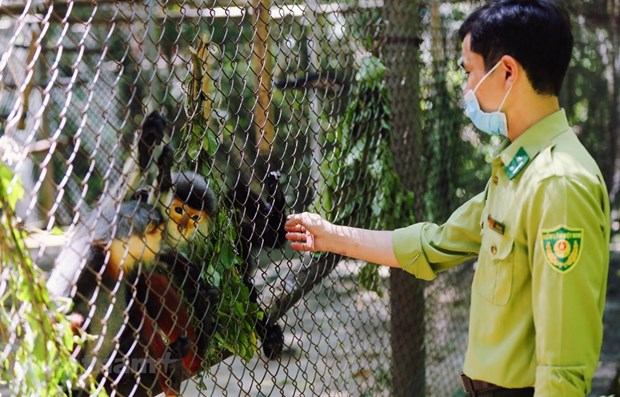 Special house of endangered and rare primates hinh anh 1