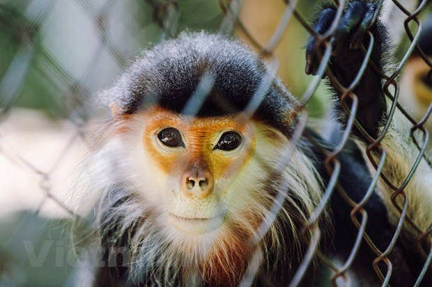Special house of endangered and rare primates hinh anh 2